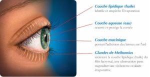 anatomie du film lacrymal